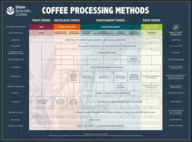 Coffee Processes